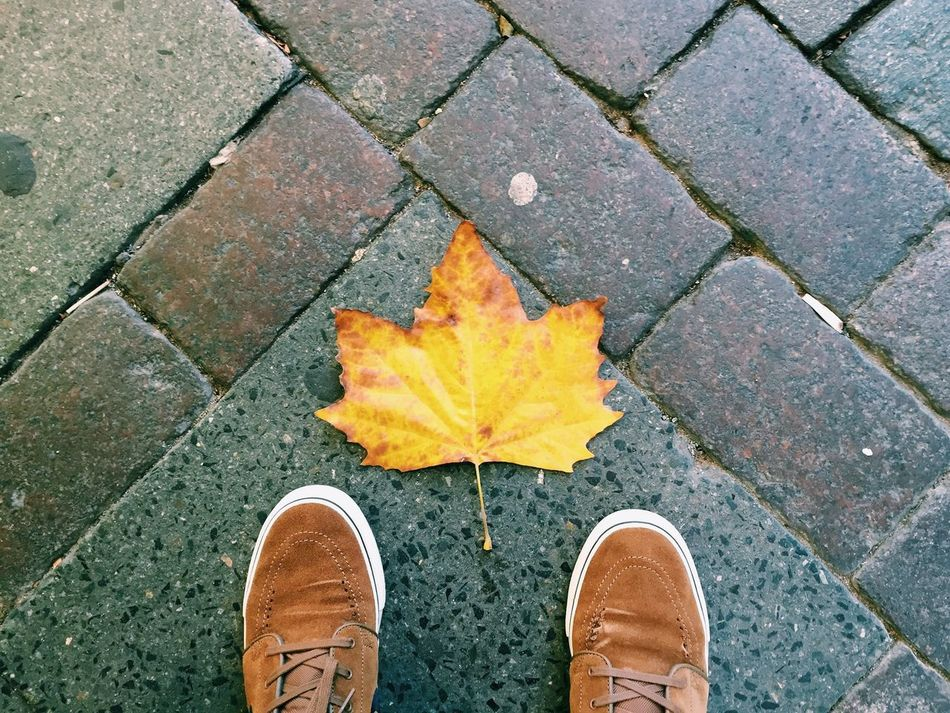 Beautiful stock photos of leaf, Autumn, Canvas Shoe, Cobblestone, Day