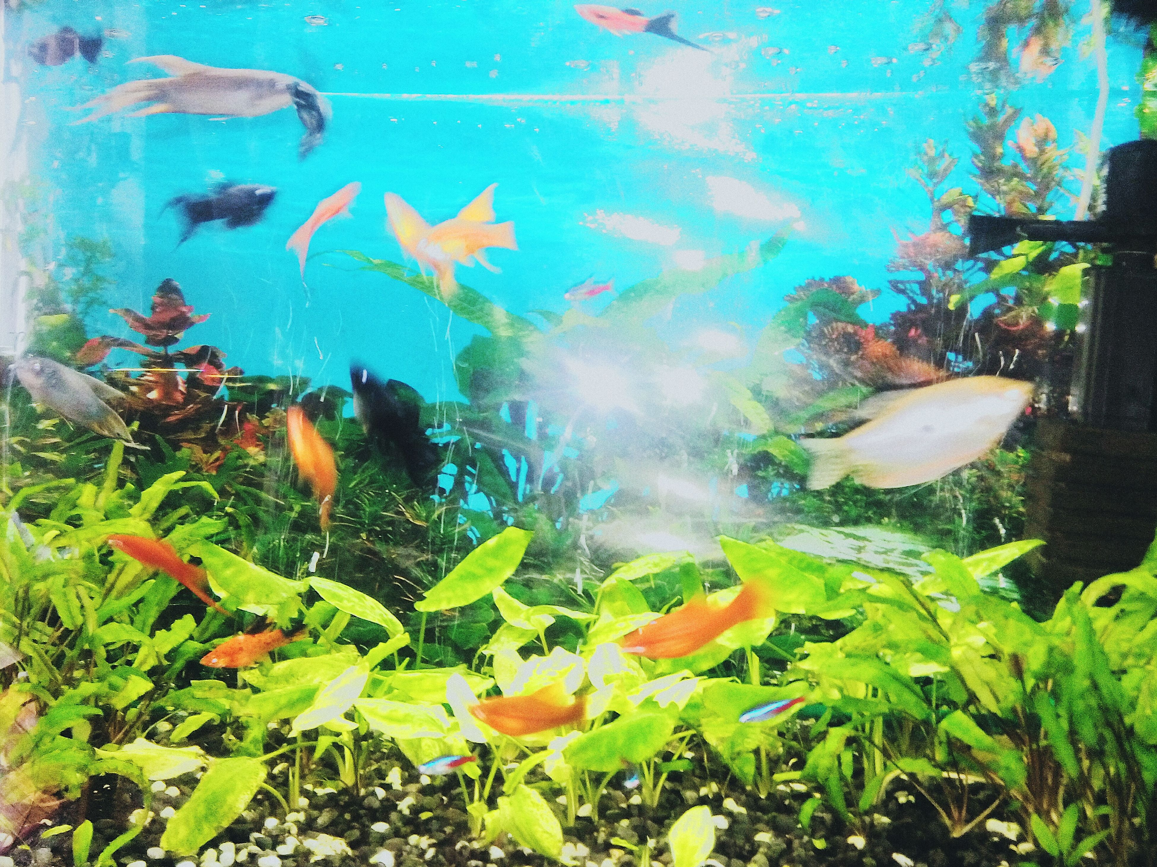 water, plant, nature, multi colored, leaf, close-up, sunlight, pond, orange color, beauty in nature, underwater, growth, transparent, no people, outdoors, day, green color, grass, fish, blue