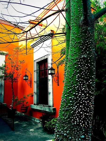 Latin America Spanish Colonial Spanish Arquitecture Villa Casita Tequila,jalisco Mexico House Estância Hacienda Finca Orange Adobe Tree Patio Courtyard  Courtyard House The Architect - 2017 EyeEm Awards The Week On EyeEm