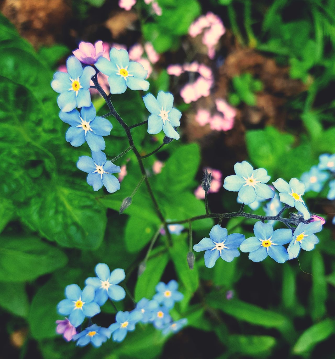 Nature Plant Beauty In Nature Outdoors Flower Leaf Day Close-up No People Fragility Growth Freshness Flower Head MYLIVE'❤ Moscow City Green Color Coloful Colors