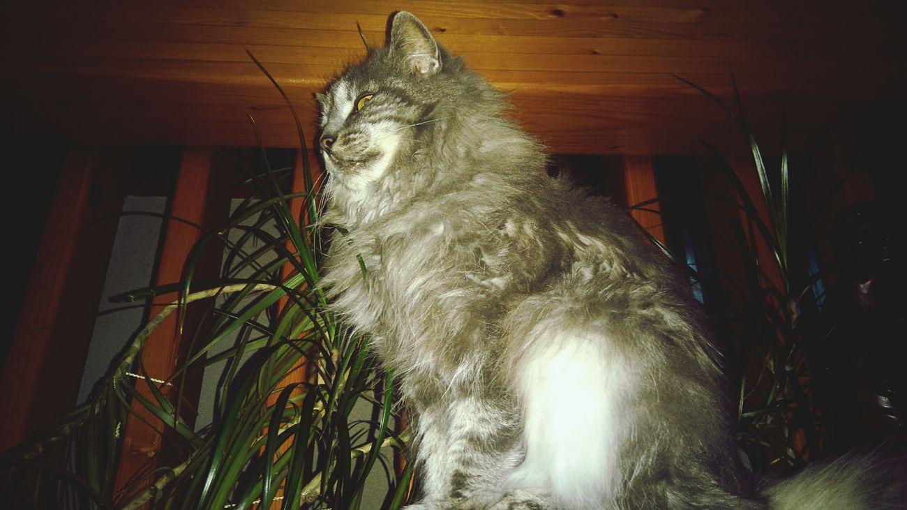 Higher No People Cat Pets Taking Photos Photography Feline Domestic Cat EyeEm Best Shots Eyeem Best Shot Domestic Animals