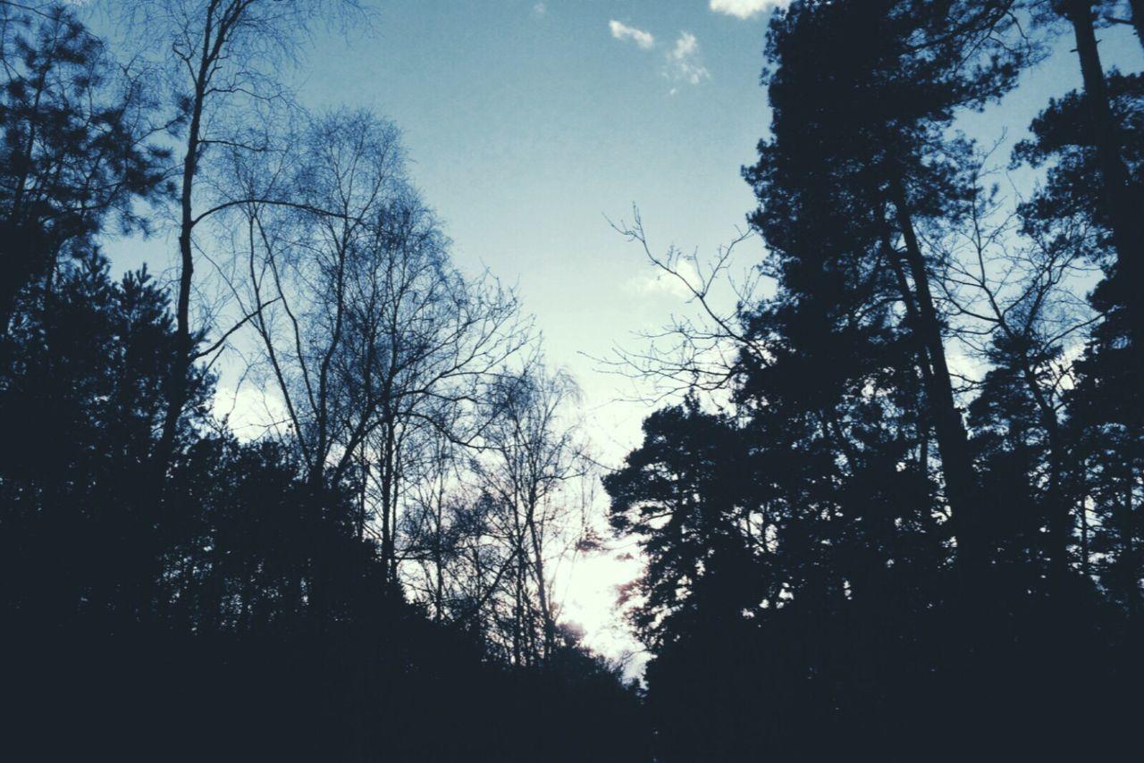 Samesamebutdifferent Thedarknightrises Lostinthewoods Trees Sky