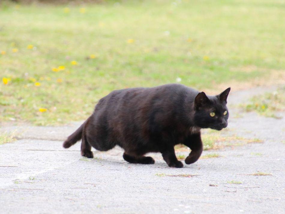 Cat 猫 Animal 野良猫 Cat♡ Stray Cat 黒猫Love Photography Kitten Cat Lovers Playing With The Animals Eyeem Best Shots - Animals Pets Corner