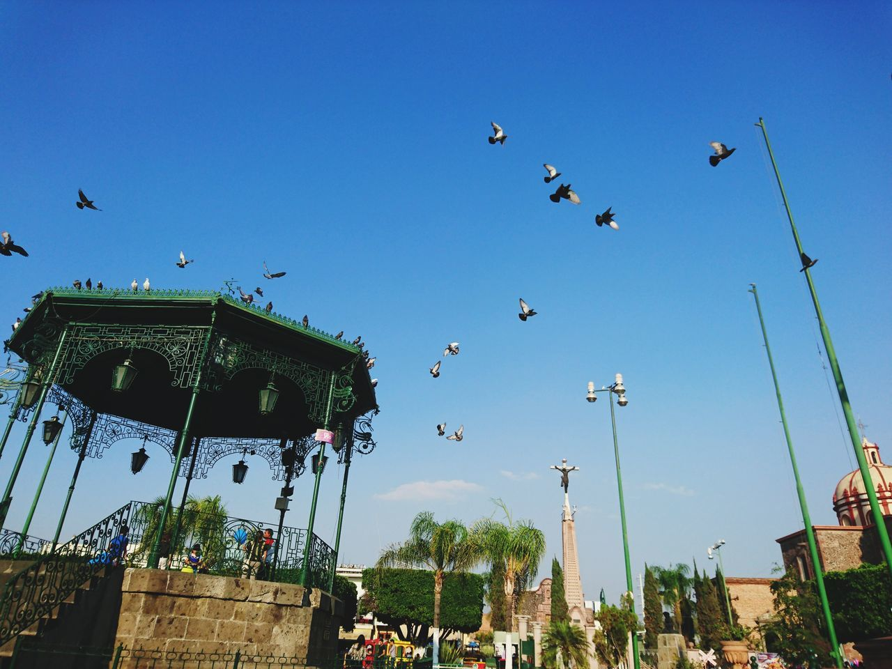 Flying Speed Sky Kiosk Pigeons Everywhere Pigeons In Flight Pigeonslife Animals In The Wild Large Group Of Animals Animal Themes Xperia Z5 Xperiaphotography XPERIA Sony Xperia Pigeons Birds XperiaZ5 Day Pigeon Bird  EyeEmNewHere BYOPaper!