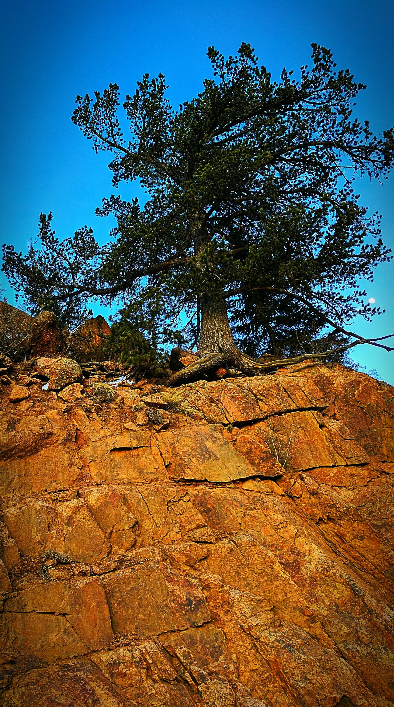 No People Nature Tree Outdoors Sky Backgrounds Beauty In Nature Red Rocks  Treelovers Tree Roots  Moonporn Lookingup Myview Backroads High Altitude Colorado Naturelover Google Pixel Aviary_edit