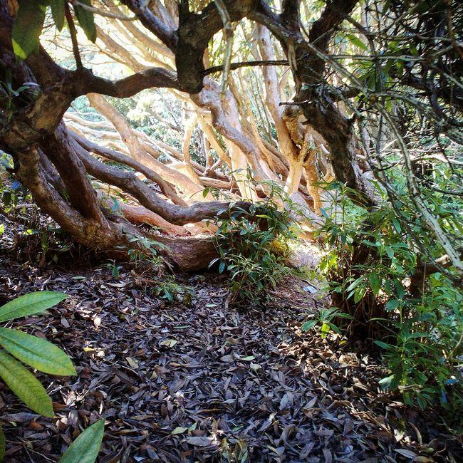 Little hidden gem in castlewellan forest park. Northern ireland. Ireland🍀 Forest Park Trees Lighting First Eyeem Photo