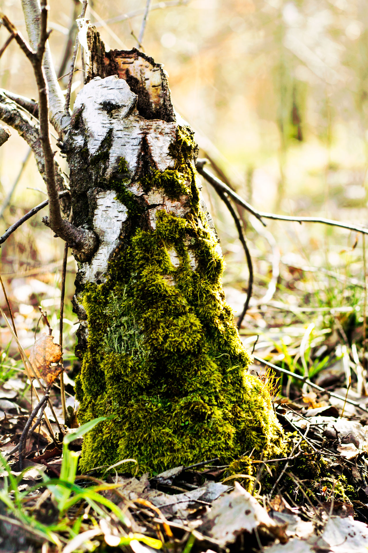 Beauty In Nature Close-up Day Focus On Foreground Forest Fragility Green Color Growth Nature No People Outdoors Plant Tree