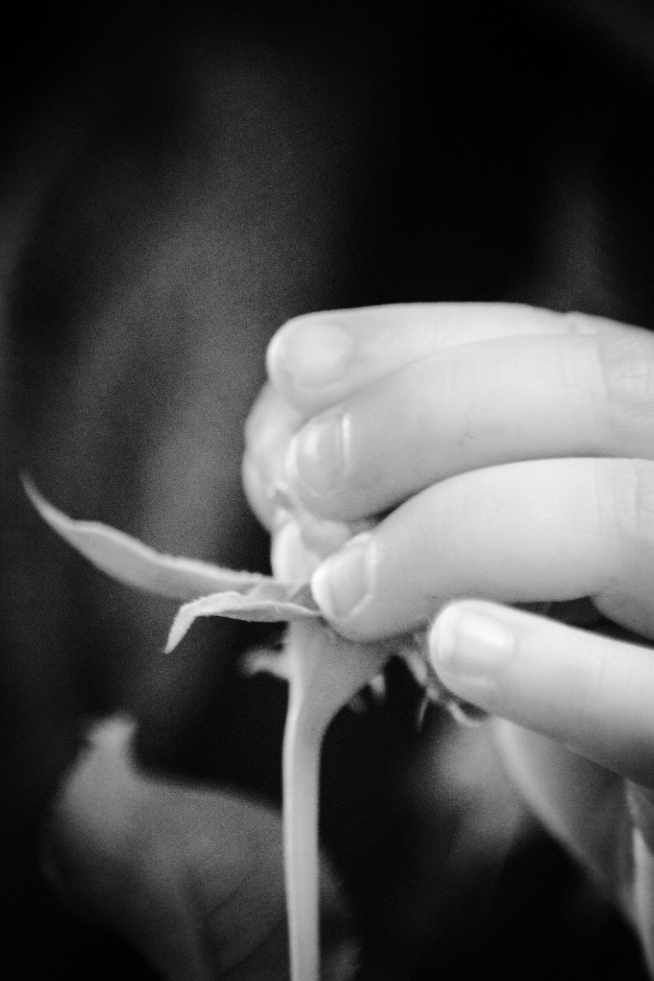 Black And White Collection! Learning From Nature Baby Hand Discovering Black And White Portrait Human Hand Holding Close-up Human Body Part Flower Fragility Indoors  Real People One Person Day People Gardening Discovering Nature.