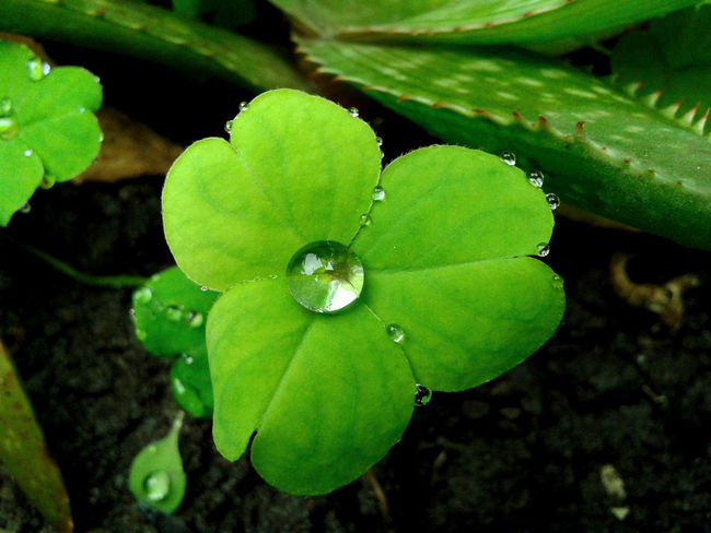 Green Color Nature Water Flower Beauty In Nature Day Plant Naturaleza🌾🌿 Phone Photography PhonePhotography Macro_collection Naturaleza Phoneography Hello World Macro Photography Macro Nature No People Trebol