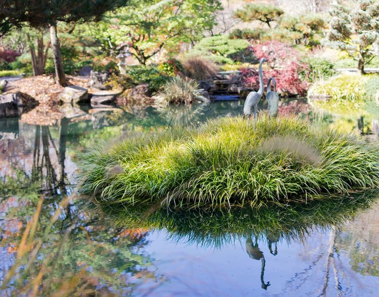 Bird Sculpture Japanese Garden Pond Reflection Beauty In Nature Day Flower Grass Green Color Growth Nature No People Outdoors Plant Reflection Rock - Object Sky Tranquility Tree Water Gibbs Gardens