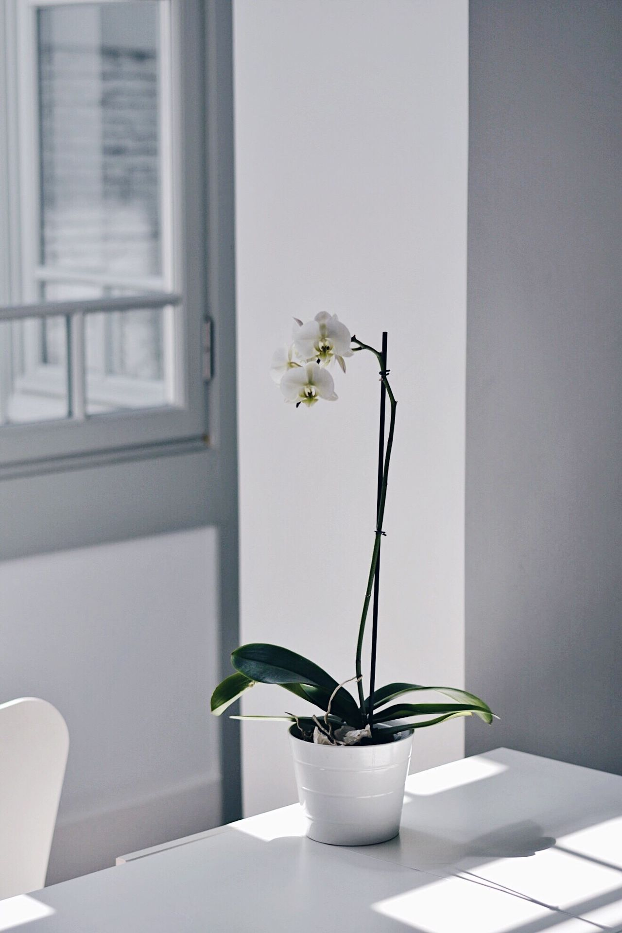 Indoors  Vase Home Interior White Color Window Flower No People Day Close-up Flower Head TheWeekOnEyeEM EyeEm Best Shots Sunlight Shadowplay Detail Plants And Flowers Decoration Interior Decorating Plants Minimalism Interior Plant White Aesthetics BYOPaper! Live For The Story