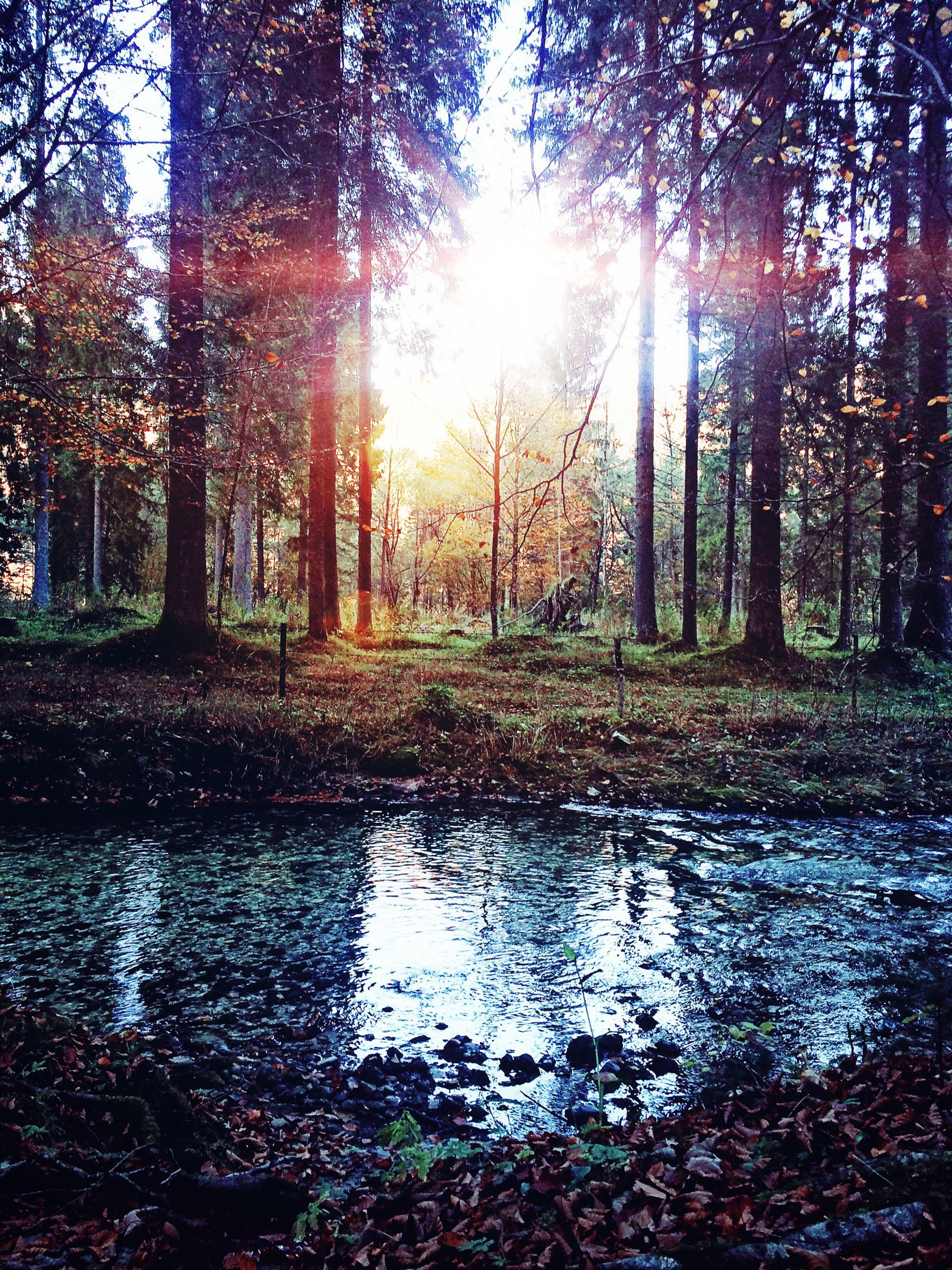 tree, tranquility, forest, tranquil scene, beauty in nature, scenics, nature, water, sunlight, sun, woodland, sunbeam, reflection, growth, tree trunk, non-urban scene, idyllic, lens flare, stream, no people