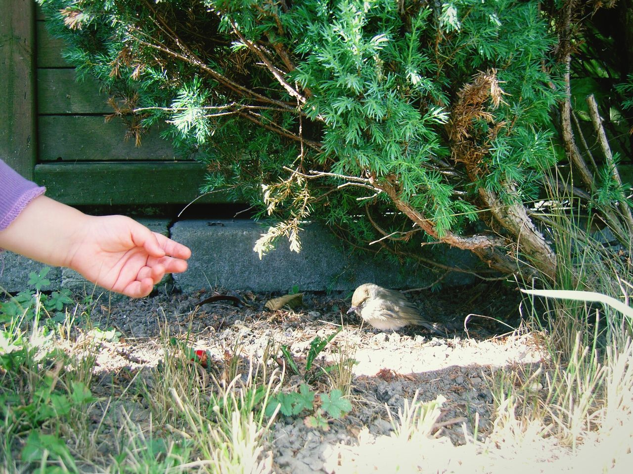 helping hand Bird Baby Hand Help Helping Hand Helping Helpme Bird Photography Baby Helping Birds_collection Birdy Little Girl Little Bird Little Hand Nesting Birds Young Nature Naturelover Naturelovers Nature On Your Doorstep Feeding The Birds Tiny Bird Tiny Hand Kind Helper Little Things