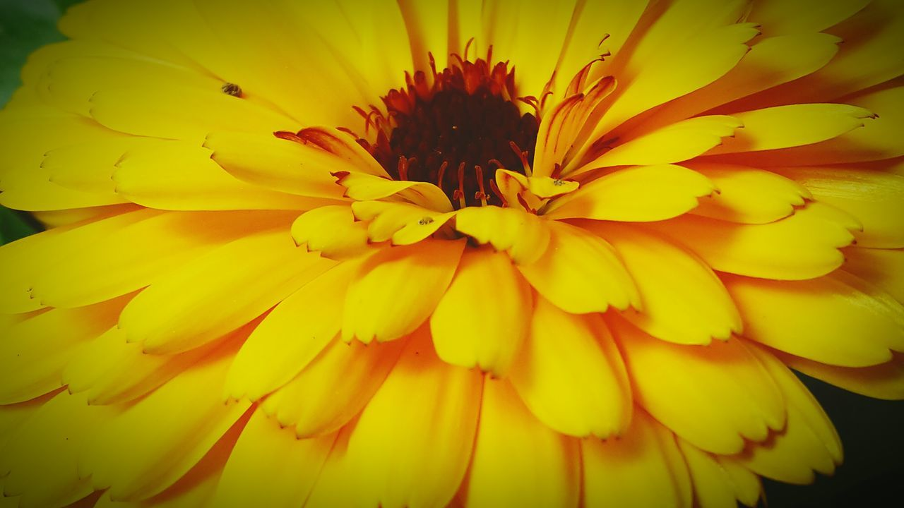 flower, yellow, petal, fragility, beauty in nature, freshness, flower head, nature, growth, no people, plant, close-up, outdoors, blooming, day