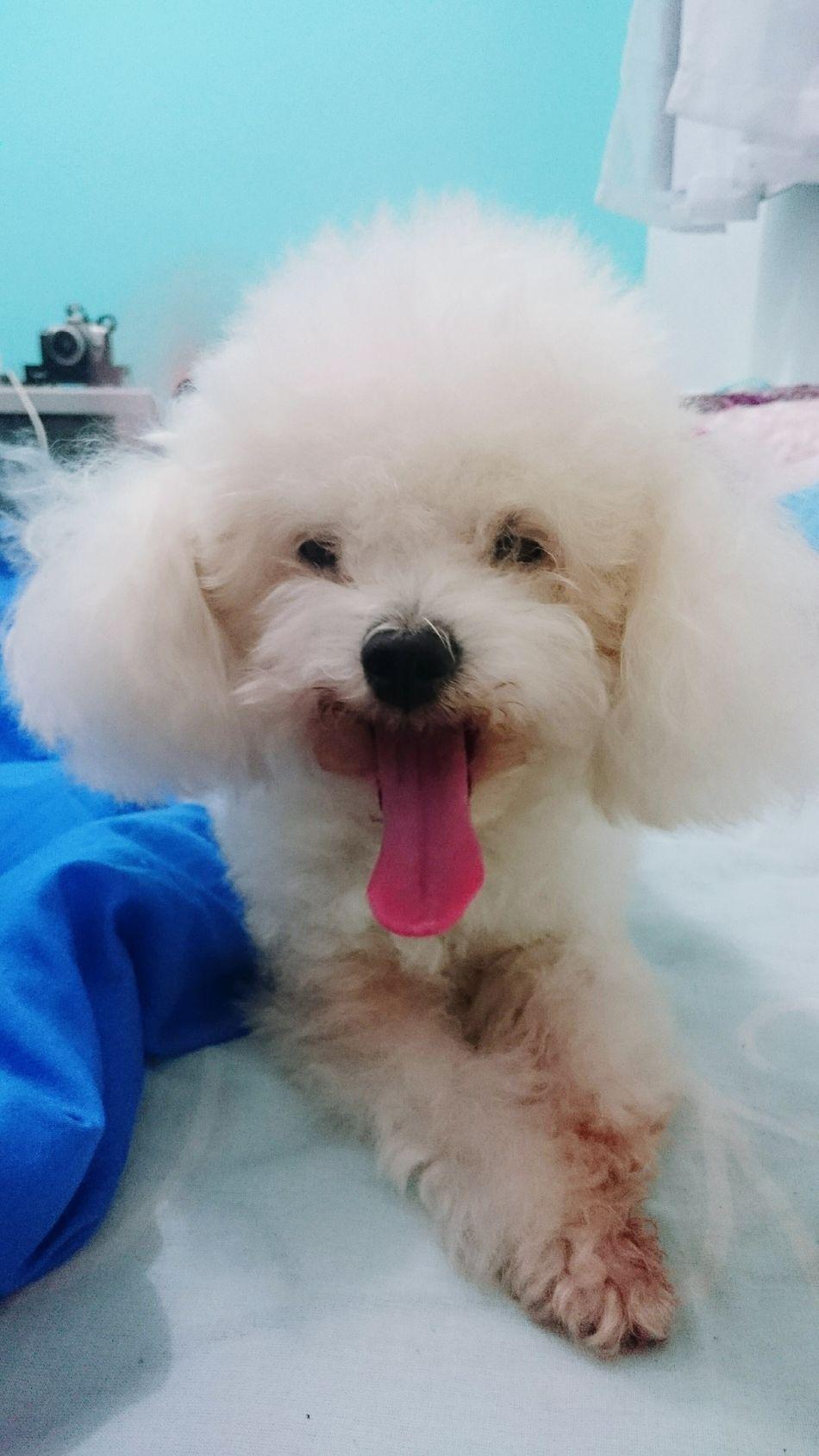 Pepita El Amor De Mi Vida ❤ Make It Yourself Dog Love