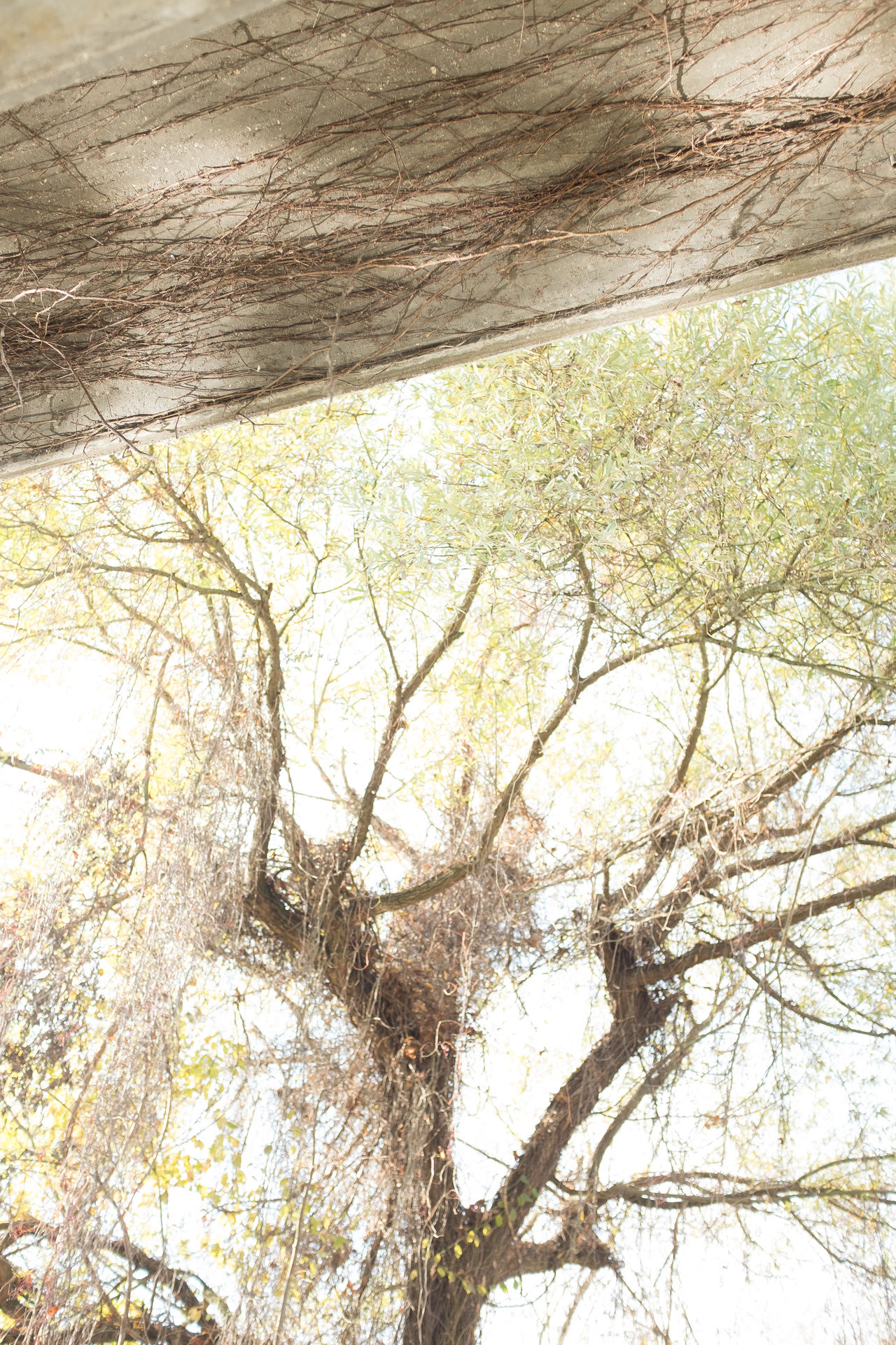 Under the bridge Backgrounds Bare Tree Beauty In Nature Branch Close-up Concrete Bridge Day Full Frame Growth Lighting Patterns Low Angle View Nature No People Outdoors Shadow Sky Southern Germany Sunlight Tranquility Tree Willow Tree