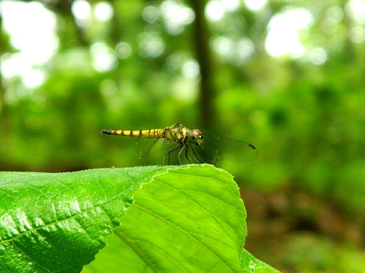 Dragonfly My Dragonfly Photo Nature EyeEm Dragonfly EyeEm Nature Lover EyeEm Bangladesh Nature_collection Macro Macro Photography