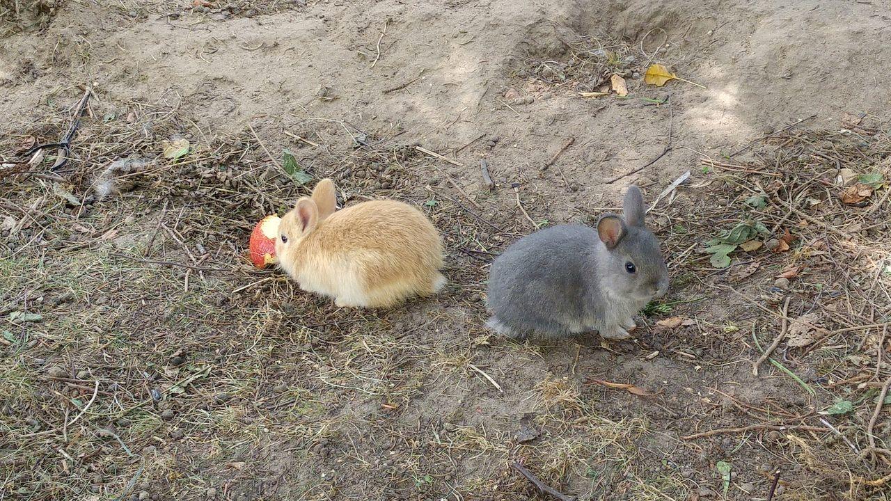 Hasen Hasenglück Hasenbabys