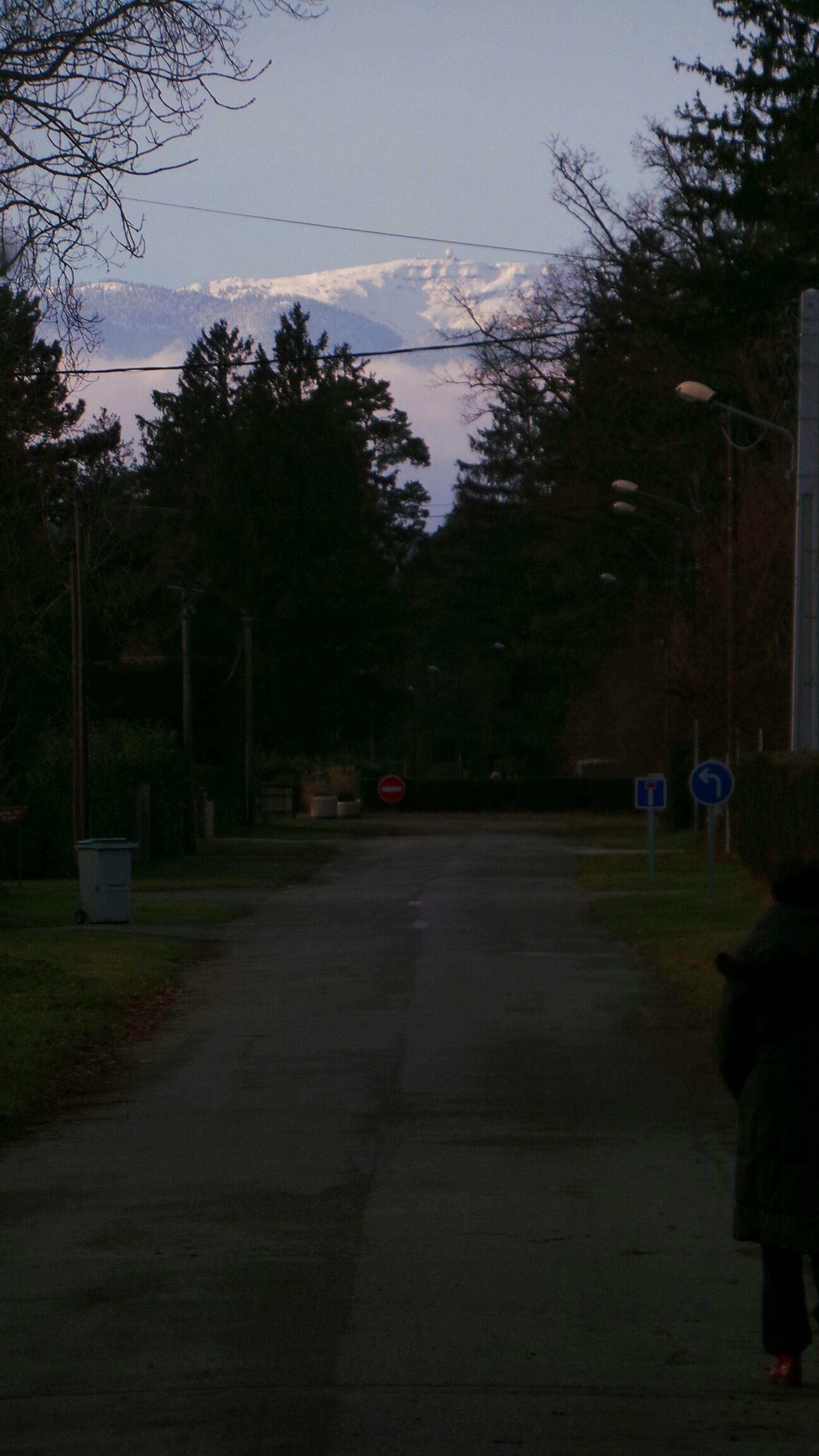 tree, men, lifestyles, the way forward, transportation, street, sky, road, leisure activity, walking, person, street light, rear view, building exterior, full length, outdoors, dusk, unrecognizable person
