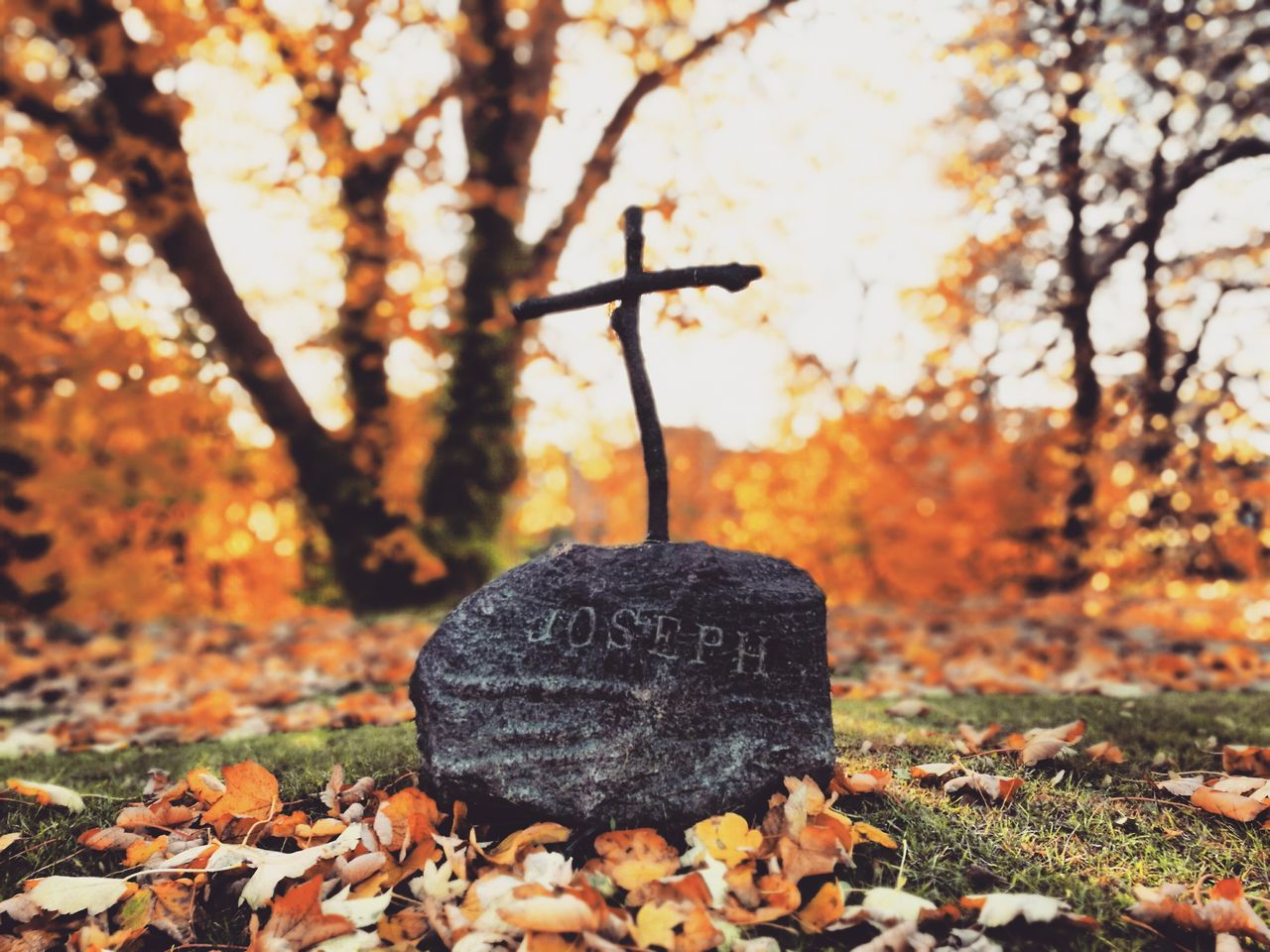 My Year My View Autumn Nature Focus On Foreground Outdoors Tree Leaf No People Close-up Sunlight Freshness Day HuaweiP9Photography Czech HuaweiP9 Huaweiphotography Huawei P9 Leica Beauty In Nature Tree Growth Grave Graveyard Graveyard Beauty Gravestone Cementery