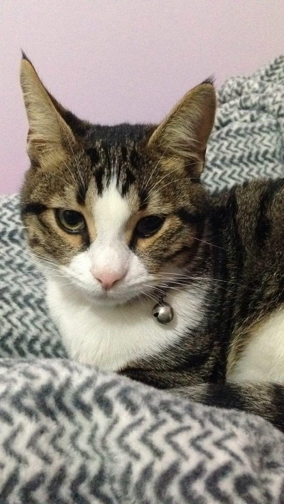 I'll kill u! Evileye Cat Angry Cat Getoutofmyroom