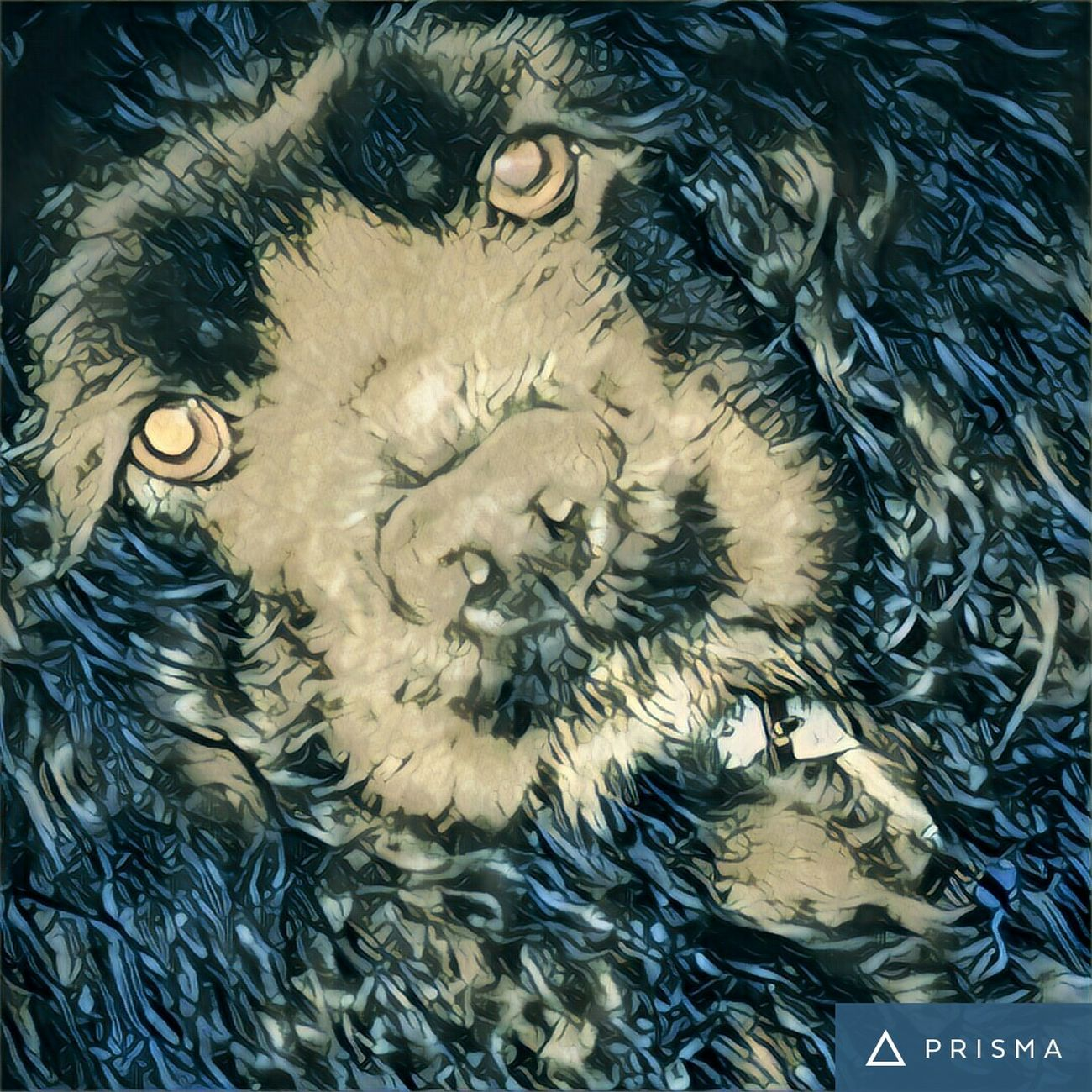 Bella Americancockerspaniel Pets Close-up My Dog Prisma App Prisma Art
