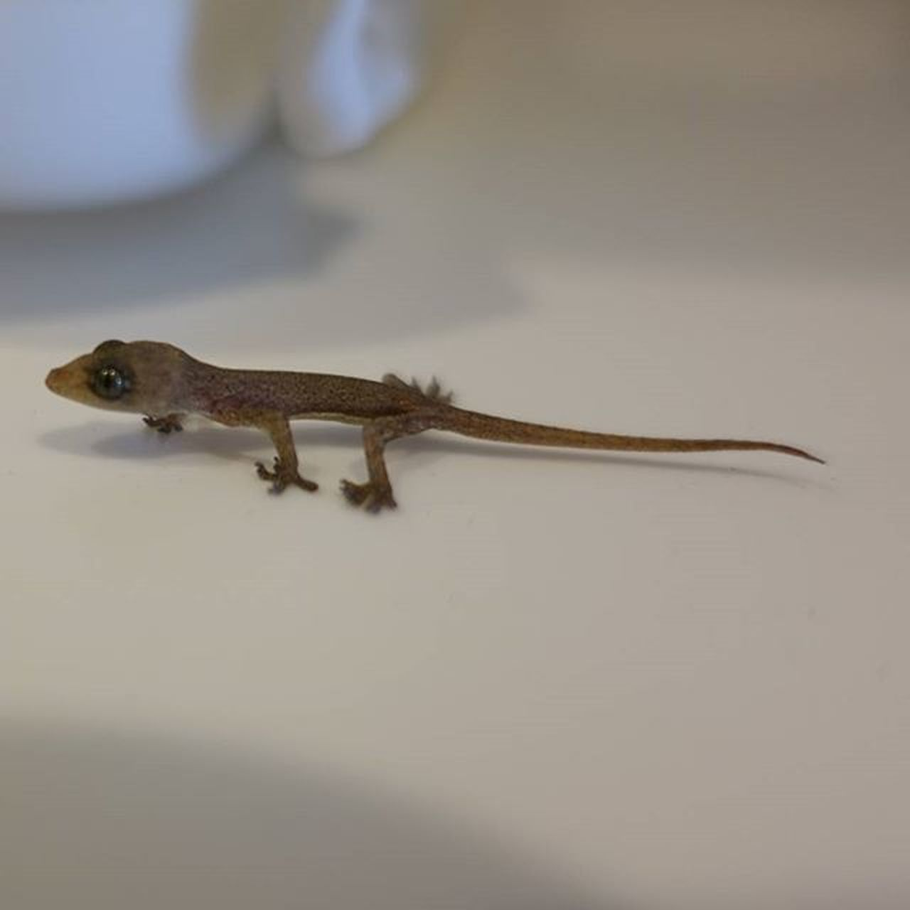 A little visitor I had earlier today Nature Gecko Natureporn Sonyrx100m4