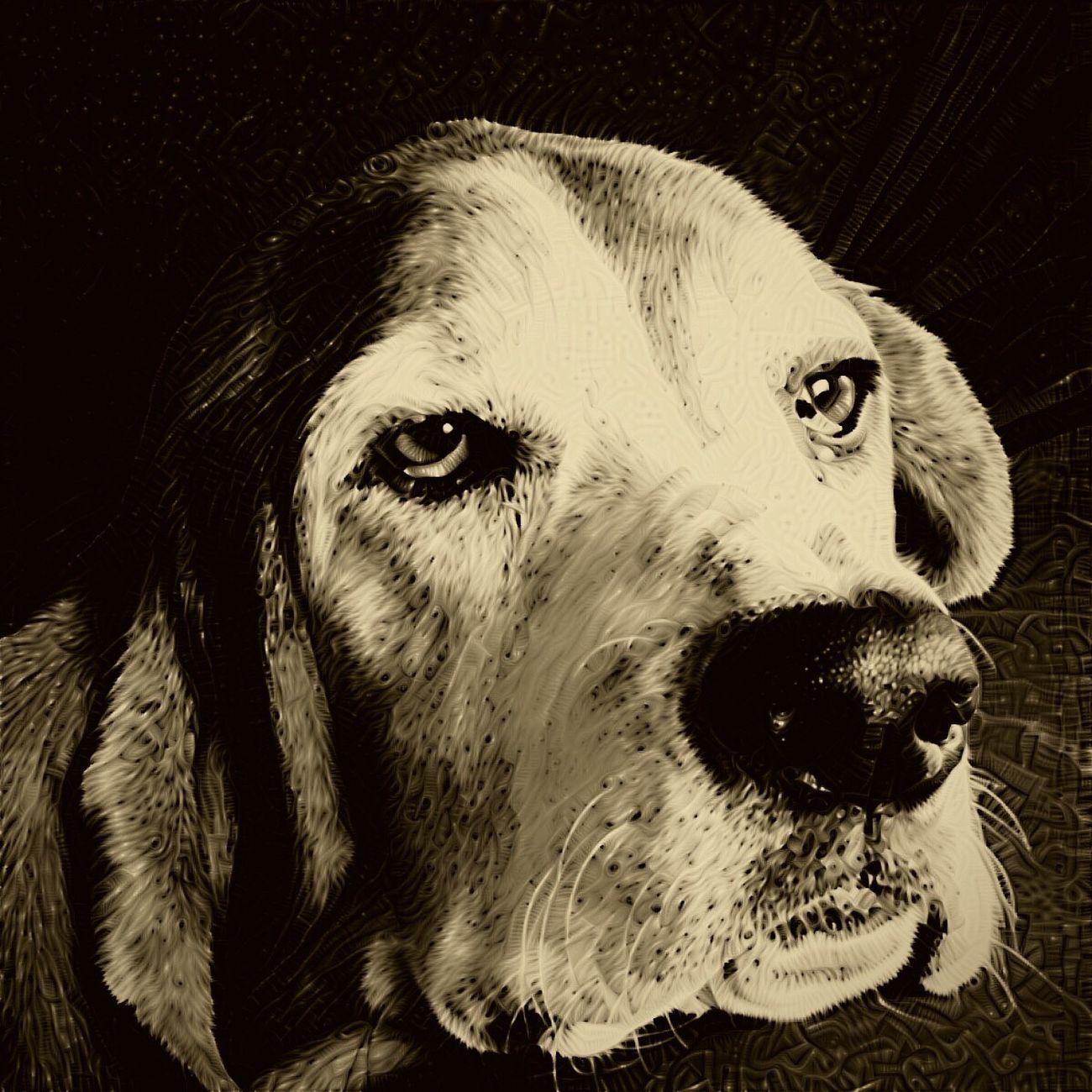 Cooper Pets Dog Close-up Handsomehound Iphonephotography Ilovemybassethound Sniffandbarkens Bassethoundsare Best Bassethound Moments Snapwagdogs Blackandwhite Photography Portrait Camerafilters