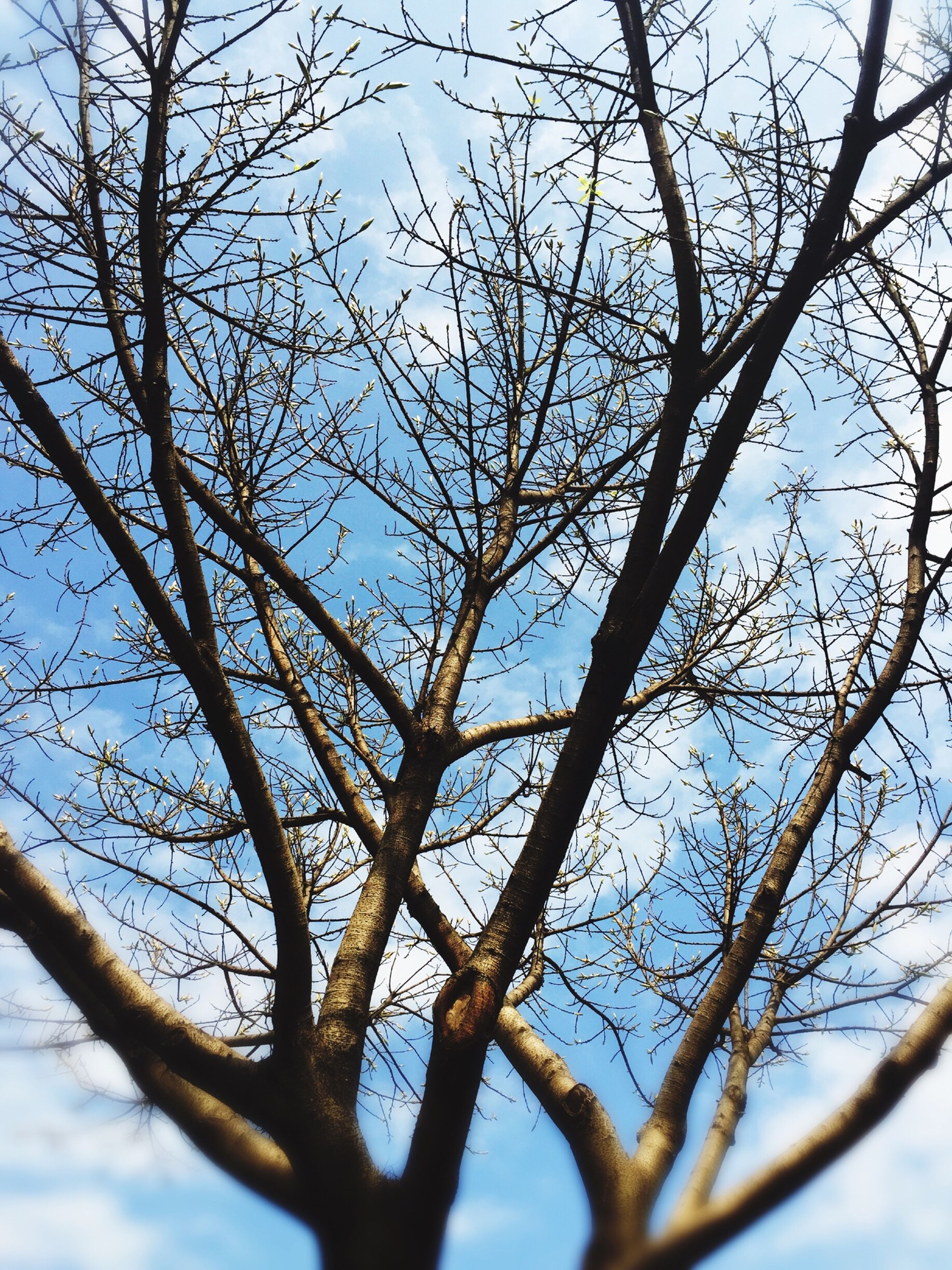 branch, tree, low angle view, bare tree, clear sky, nature, blue, tranquility, sky, beauty in nature, growth, day, outdoors, no people, backgrounds, scenics, close-up, full frame, tree trunk, sunlight