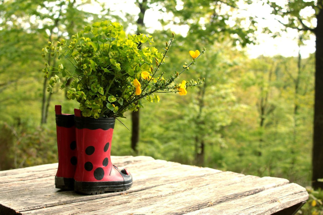 Home in the forest. Red Nature Focus On Foreground No People Tree Beauty In Nature Close-up Outdoors Day Positive Vibes Imperfectly Perfect Green Shades Of Green  Natural Light Photography Flower Nature European  Sunlight Depth Of Field Vivid Colors Red And Green Feng Shui Flower Arrangement Boots Ladybuglovers