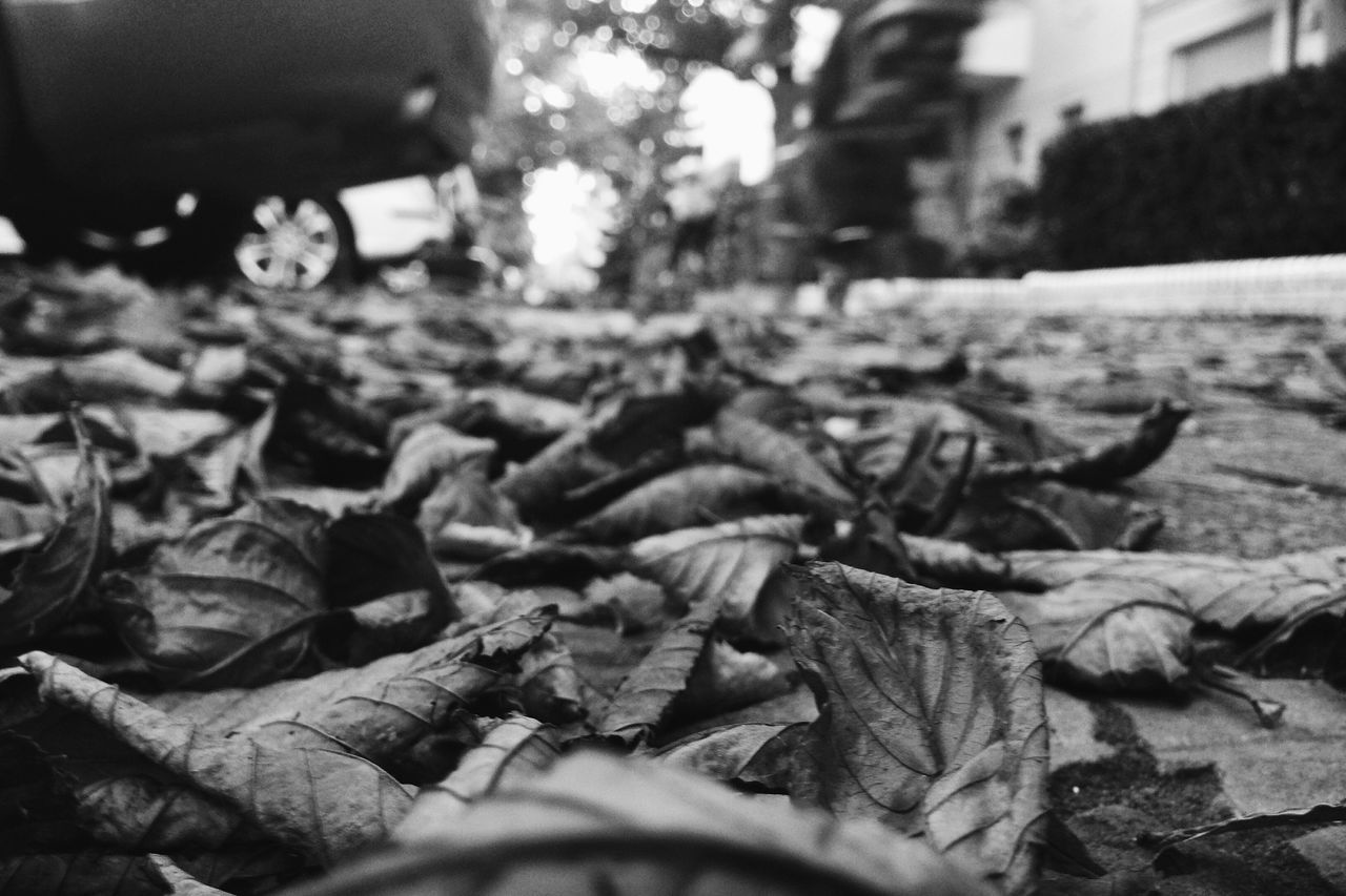 leaf, dry, autumn, change, selective focus, outdoors, no people, day, nature, close-up, fragility