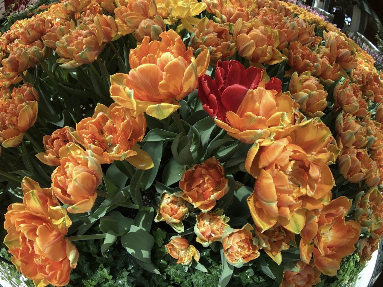 flower, freshness, petal, fragility, rose - flower, flower head, bouquet, beauty in nature, no people, flower market, nature, variation, close-up, flower shop, outdoors, day