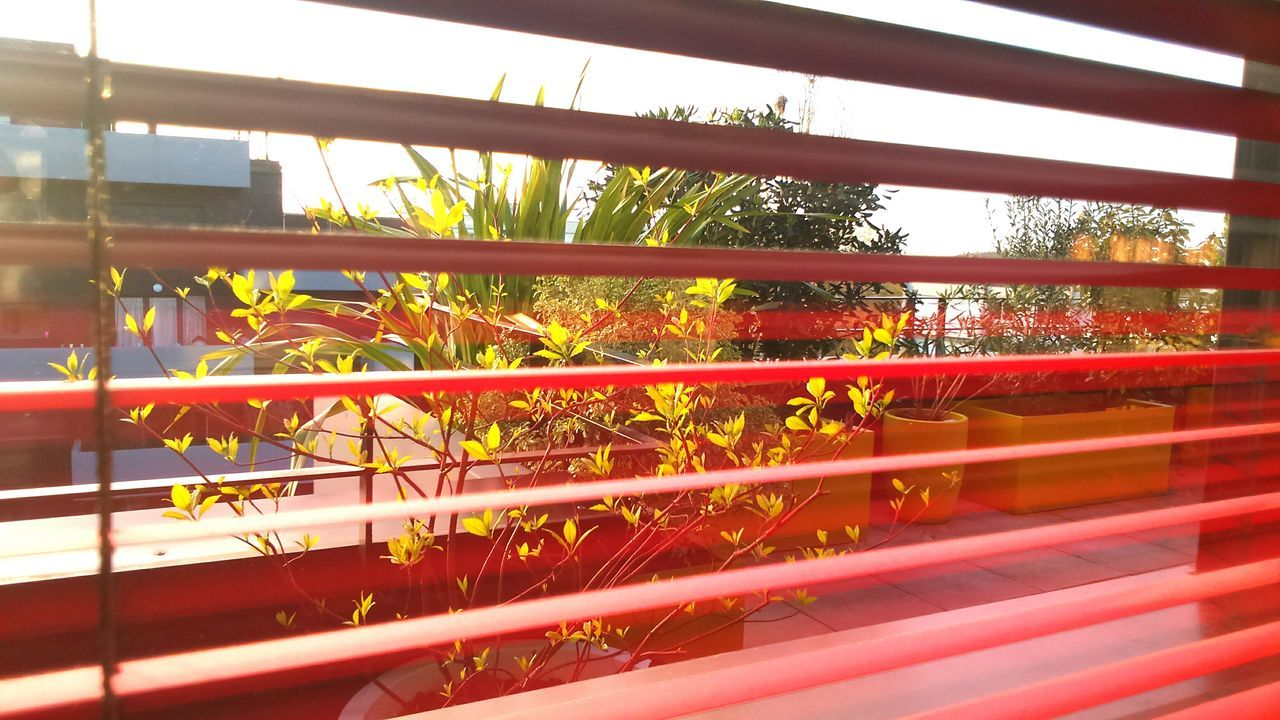 red, tree, growth, day, no people, outdoors, nature, plant, sunset, close-up, sky, greenhouse