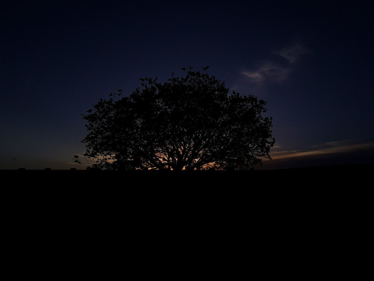 Tree Silhouette Nature Night Beauty In Nature Sky No People Landscape Tranquility Outdoors Scenics Growth Astronomy Bestsellers Premium Collection Brazil Getty Images Tree Sunset Sunshine Sunset Silhouettes Sunshine Silhouettes Nature Live For The Story Place Of Heart The Great Outdoors - 2017 EyeEm Awards EyeEmNewHere Sommergefühle EyeEm Selects