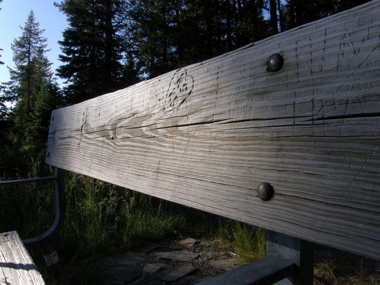 Bench No Edits No Filters Oregon