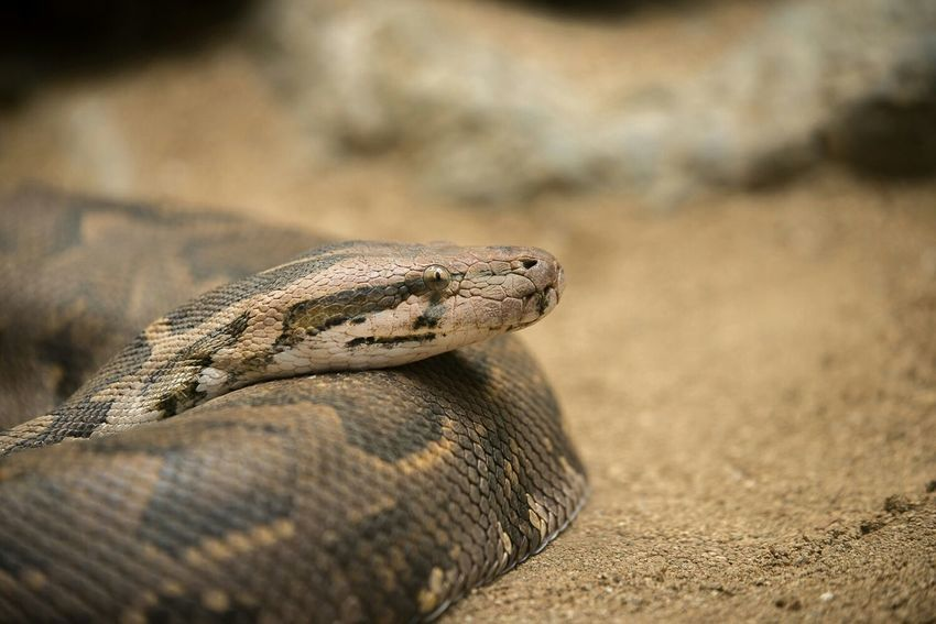 Nikon D610 Zoo De Barcelona Somosfelices Barcelonalove