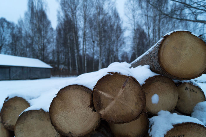 Timber logs in Fetsund, Norway. Close-up Cold Temperature Day Landscape Log Logs Nature No People Norway Norwegian Outdoors Snow Timber Tree Trees Winter