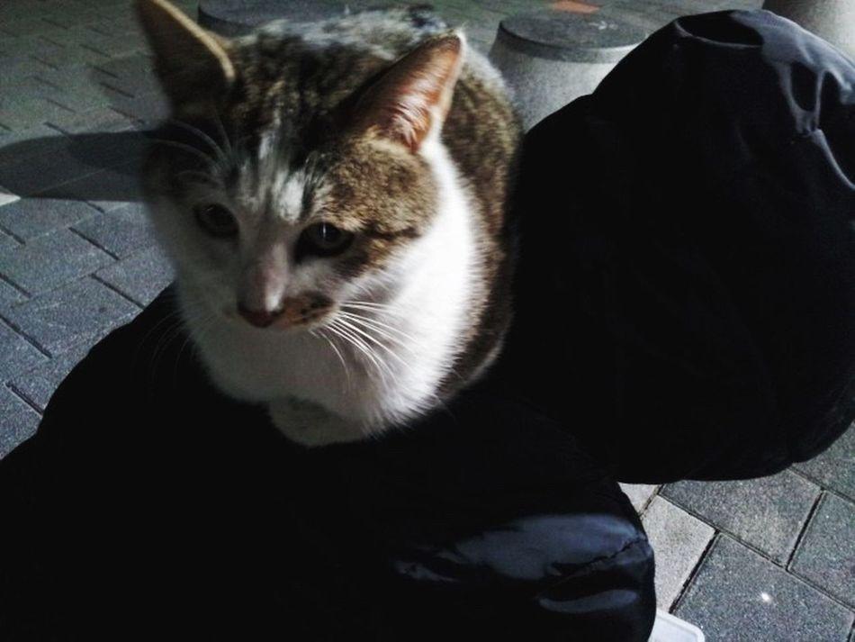 Seokchon Lake Cats Cutty Cat Cat Lovers Night Night Cat Feralcat Animal Nature People And Cats Close-up
