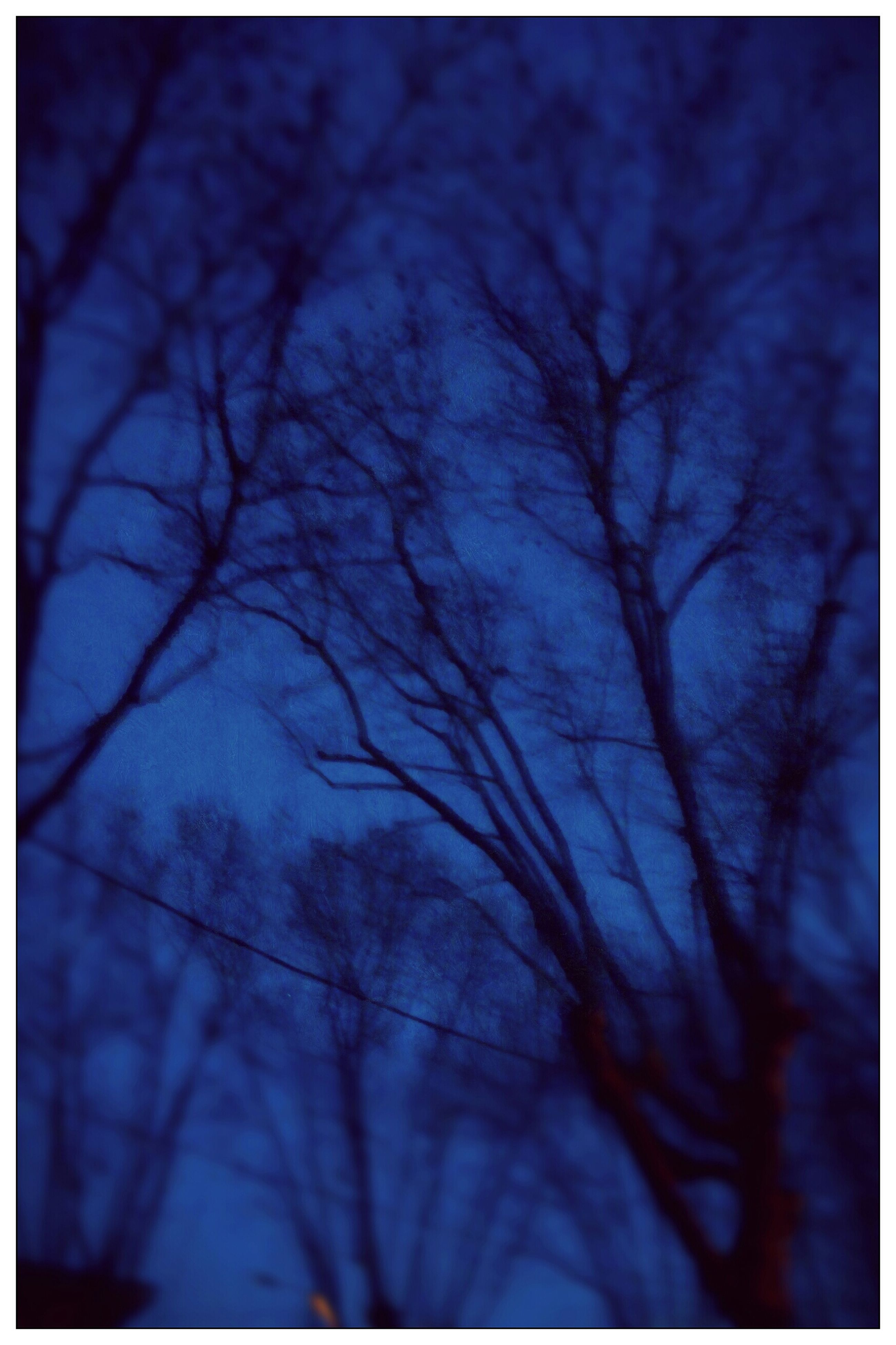 bare tree, tree, transfer print, branch, low angle view, auto post production filter, sky, tranquility, silhouette, nature, beauty in nature, backgrounds, outdoors, tranquil scene, scenics, full frame, no people, day, cloud - sky, selective focus