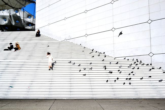 Again, La Grande Arche in Paris, I just love this building and its design! Architecture Minimalism Stairs Buildings Pigeons Open Edit Capital Cities  Capture The Moment Seeing The Sights