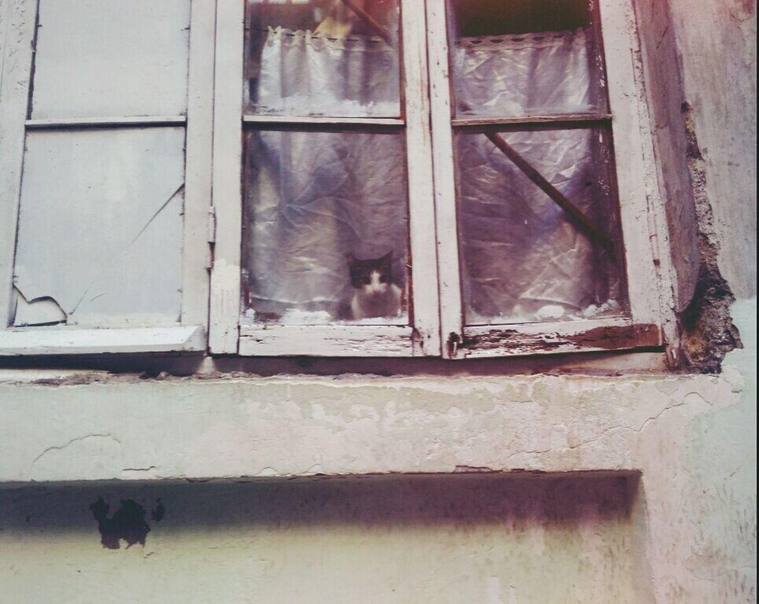 Baku Azerbaijan 28 May Cat Animal Home Window Winter Azerbaycan Bakı Animal Photography