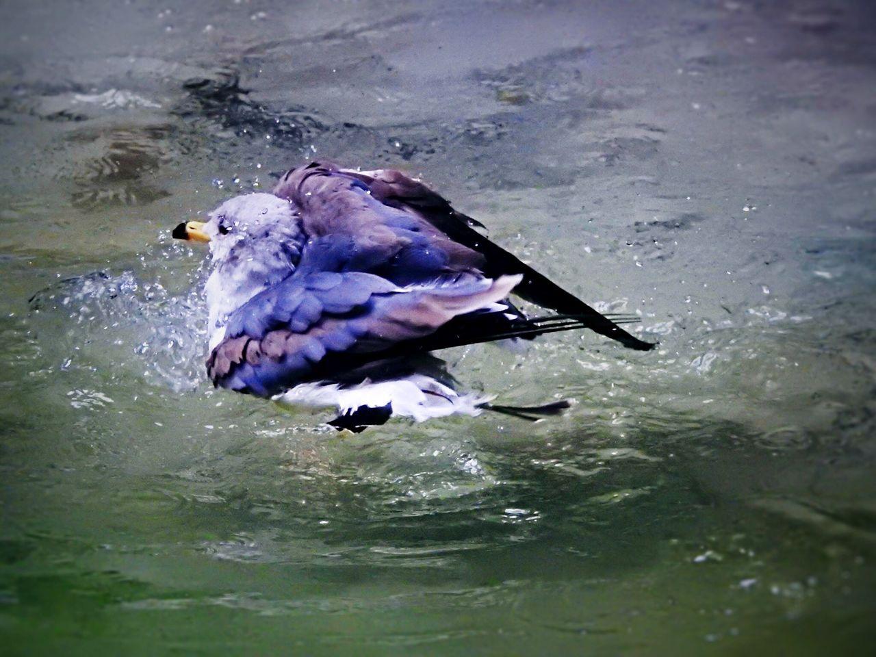 Seagull Bird Water EyeEm Nature Lover Tadaa Community