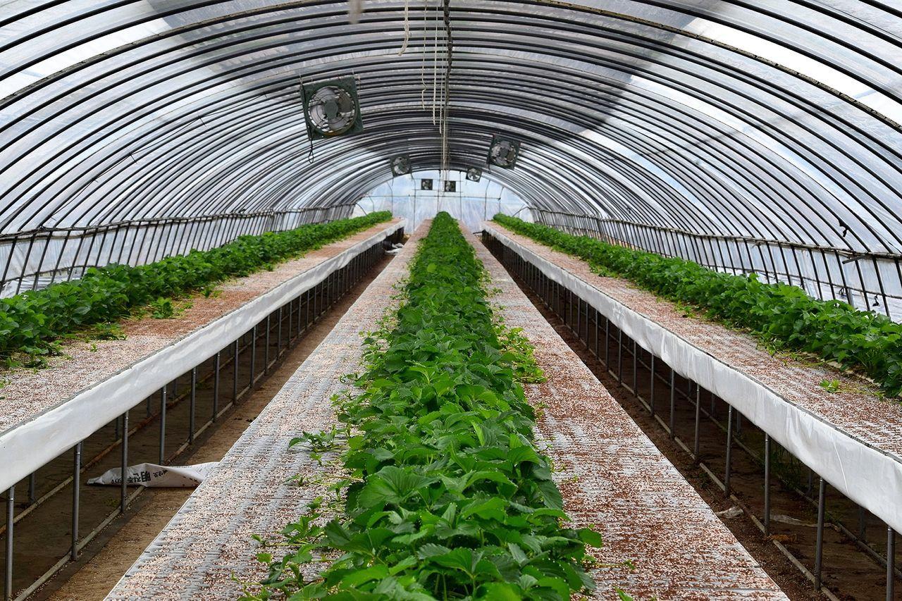Beautiful stock photos of plant, Abundance, Agriculture, Day, Freshness