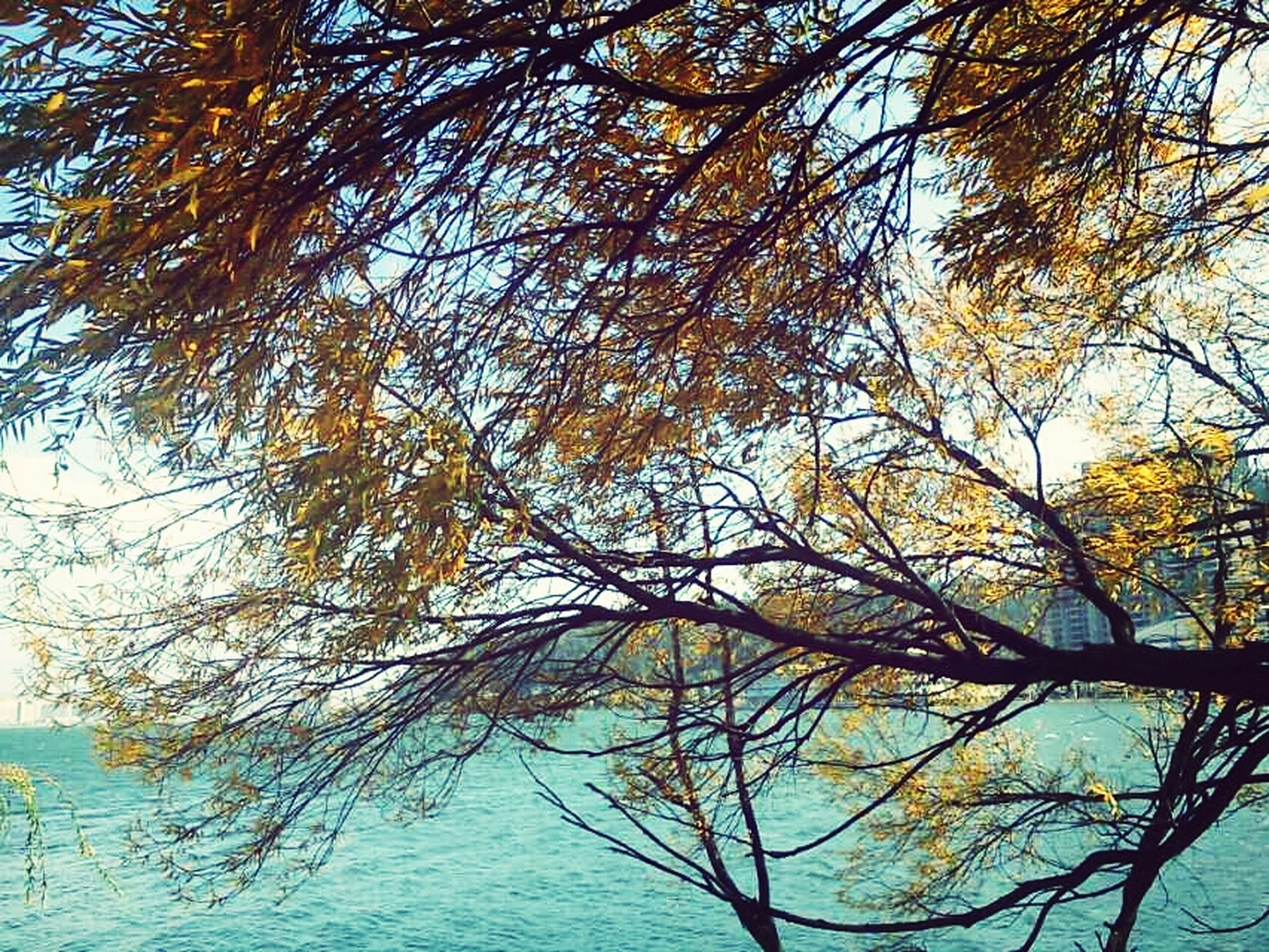 tree, branch, low angle view, tranquility, growth, nature, beauty in nature, sky, scenics, tranquil scene, day, clear sky, outdoors, water, no people, blue, tree trunk, idyllic, green color, leaf