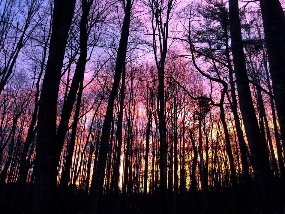 Millennial Pink Nature Tree Bare Tree Tranquility Beauty In Nature Scenics Silhouette No People Forest Outdoors Purple Low Angle View Sky Sunset Landscape Day EyeEmNewHere 3XSPUnity The Secret Spaces