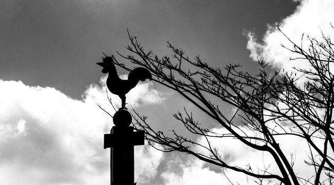 Animal Themes Bare Tree Bird Black And White Cloud Cloud - Sky Low Angle View One Animal Silhouette Sky