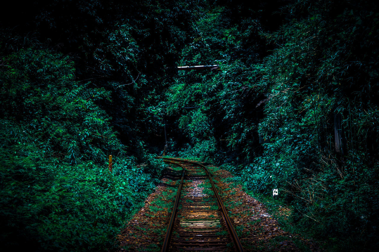 forest, beauty in nature, nature, tree, scenics, the way forward, tranquility, tranquil scene, transportation, outdoors, no people, growth, landscape, night
