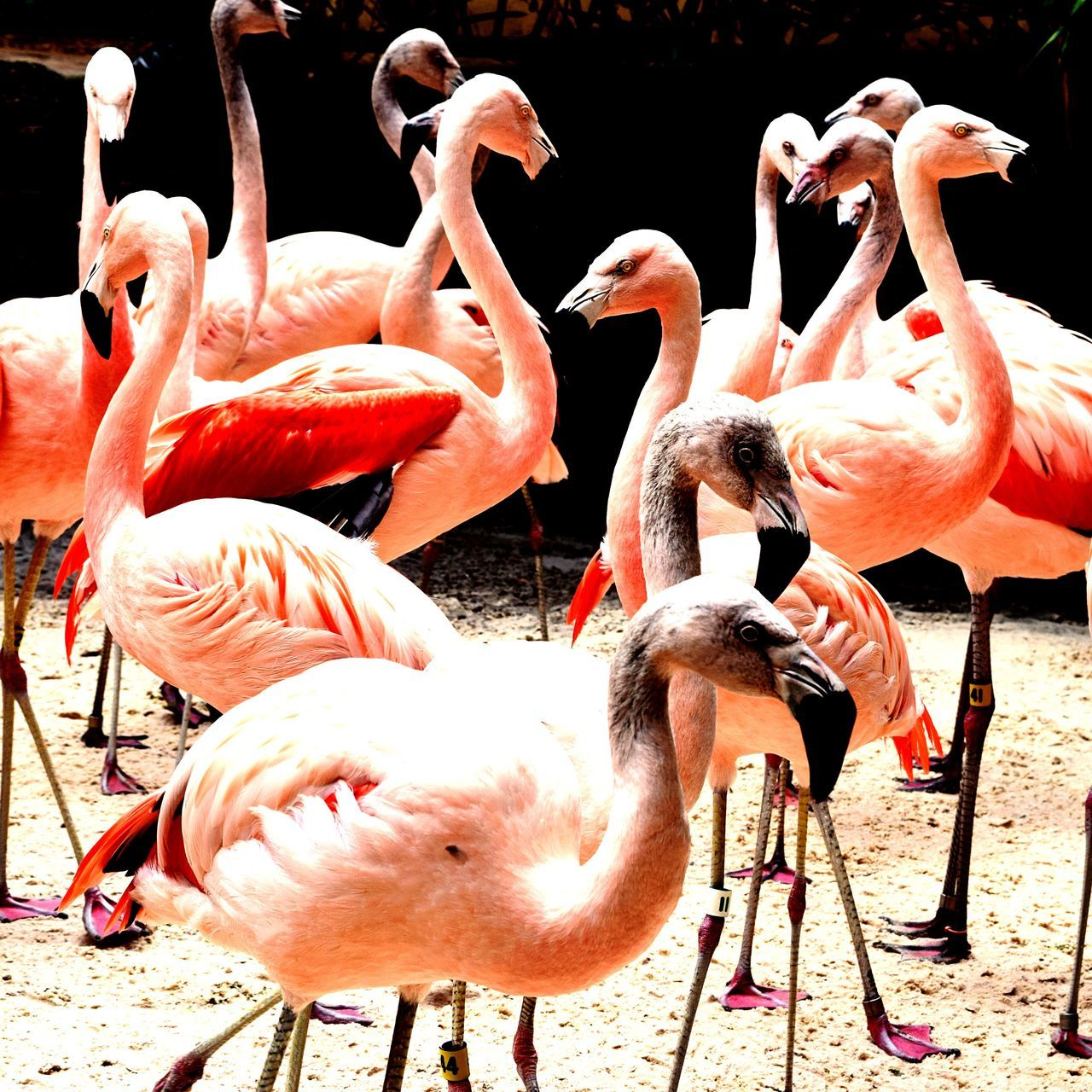 Bird Animal Themes Flamingo Animals In The Wild Nature Outdoors First Eyeem Photo EyeAmNewHere EyeEmNewHere