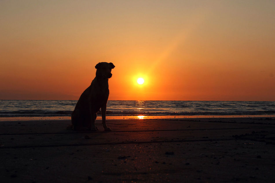 Beautiful stock photos of hunde, One Animal, alone, beach, beauty In Nature