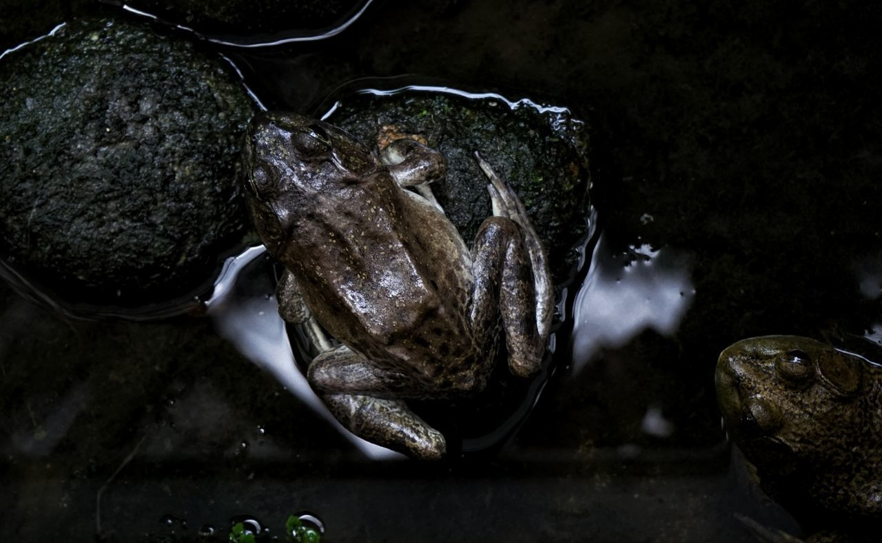 Frog Fish Seafood Business Finance And Industry Fishing No People Water Market Indoors  Close-up Sea Life Animal Themes Food Swimming Nature Freshness Day UnderSea pond Pond Reflections Pond View Frog Pond Frog Prince Pond Pondlife Pond Life Frogman
